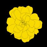sawasta